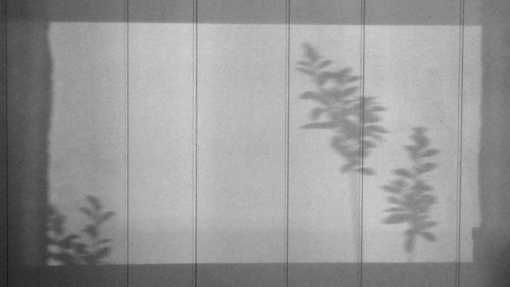 Shadow of flowers on a grey, wood paneled wall.