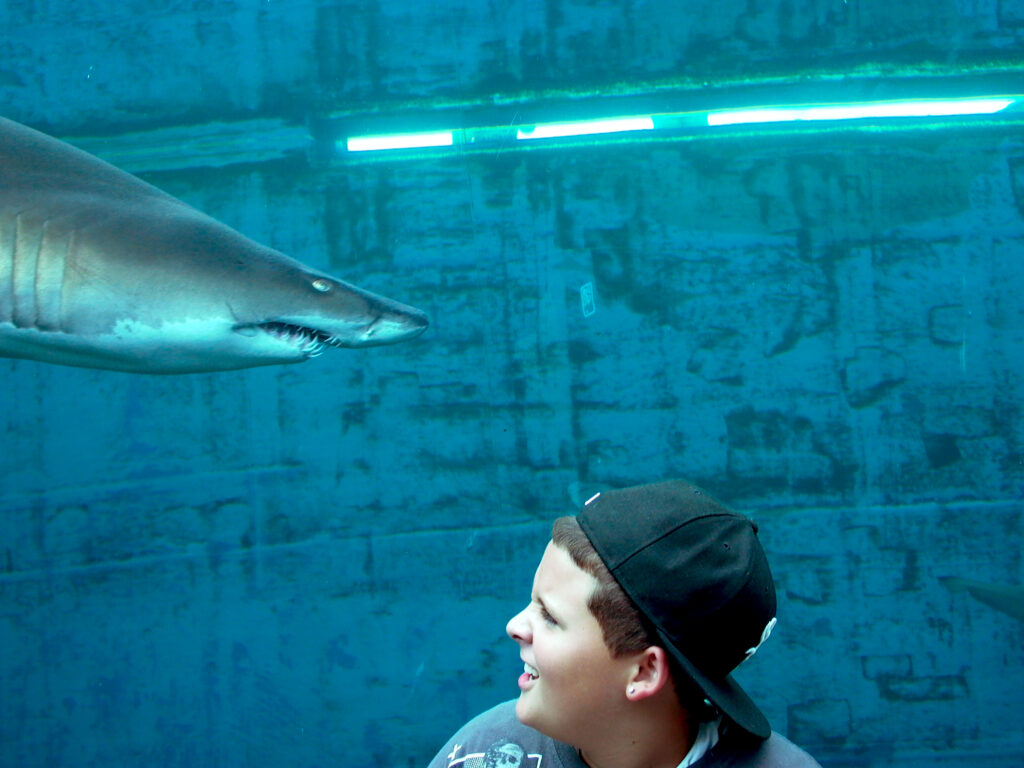Young boy with backwards baseball cap turning to look at shark approaching his head.